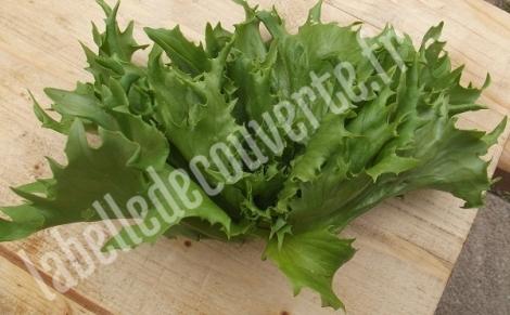 salade-reine-des-glaces-1